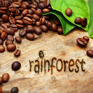 Rainforest Blend